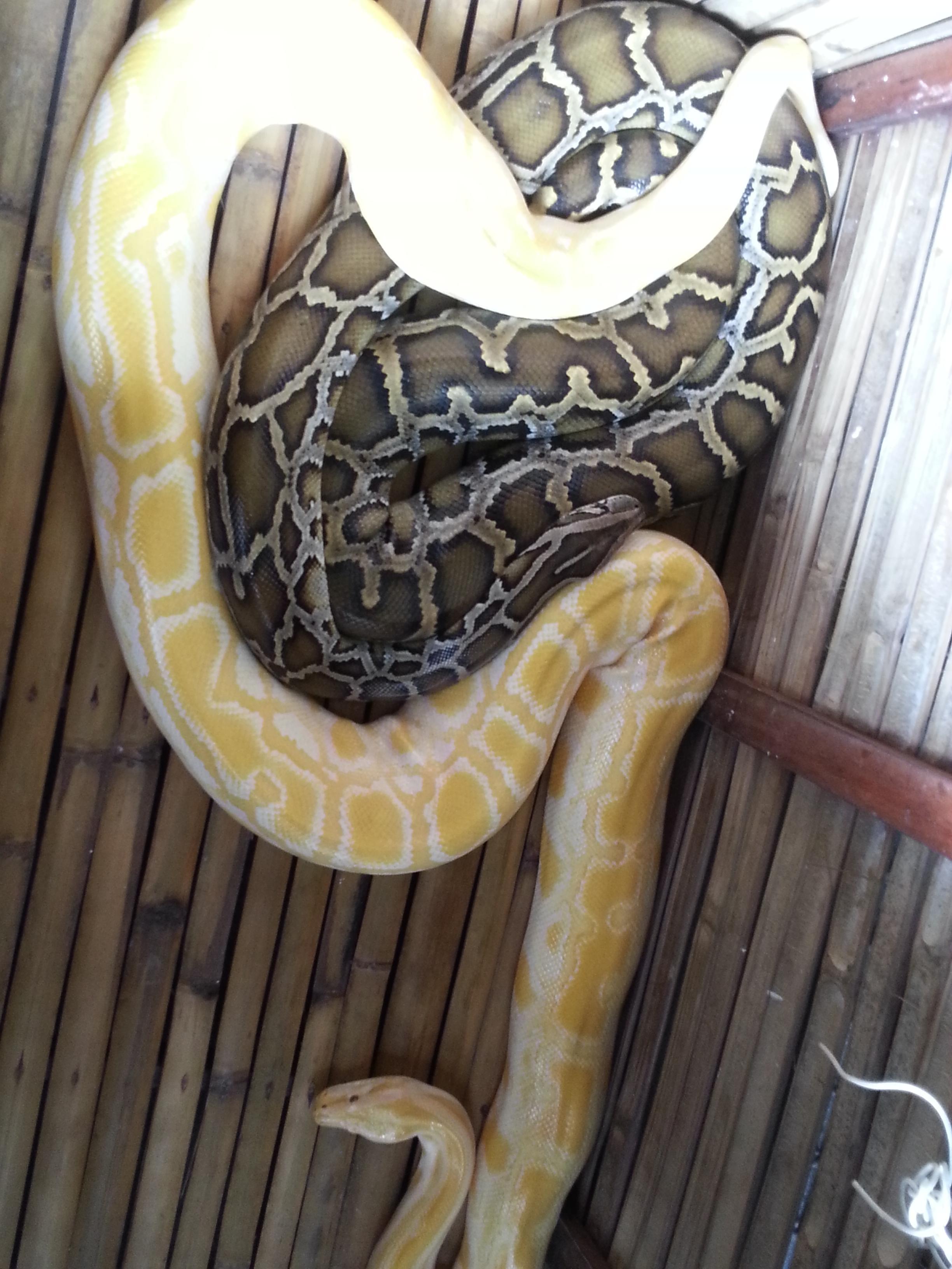 薄荷岛上一个以蟒蛇为主的动物园
