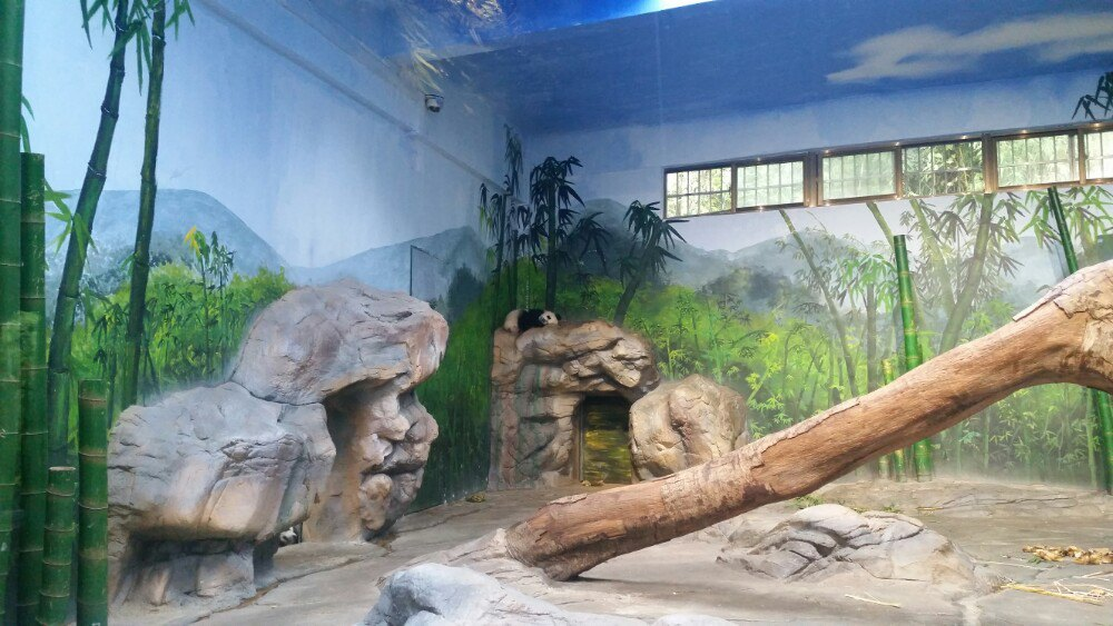 长隆第二天:野生动物园一日游。建议路线:广州地铁3号线汉溪长隆站A出口,过天桥搭乘接驳车至野生动物园南门。同车站换乘接驳车至野生动物园北门入园。(因为车游区就在北门)游览的小火车要做右侧,相比左侧右侧看到的动物更多。猛兽区会有工作人员看到车来了就投喂。小火车全程有专业讲解介绍动物。与上海野生动物园不同的是,动物并不是全放养的状态,猛兽都是圈在一定区域里,所以乘坐的是小火车而不是全封闭的旅行车。车游结束建议先玩车游区旁边的侏罗纪森林--雨林仙踪--金蛇秘境。这一圈玩好大家就看好表演时间,时间足够就先白虎跳水