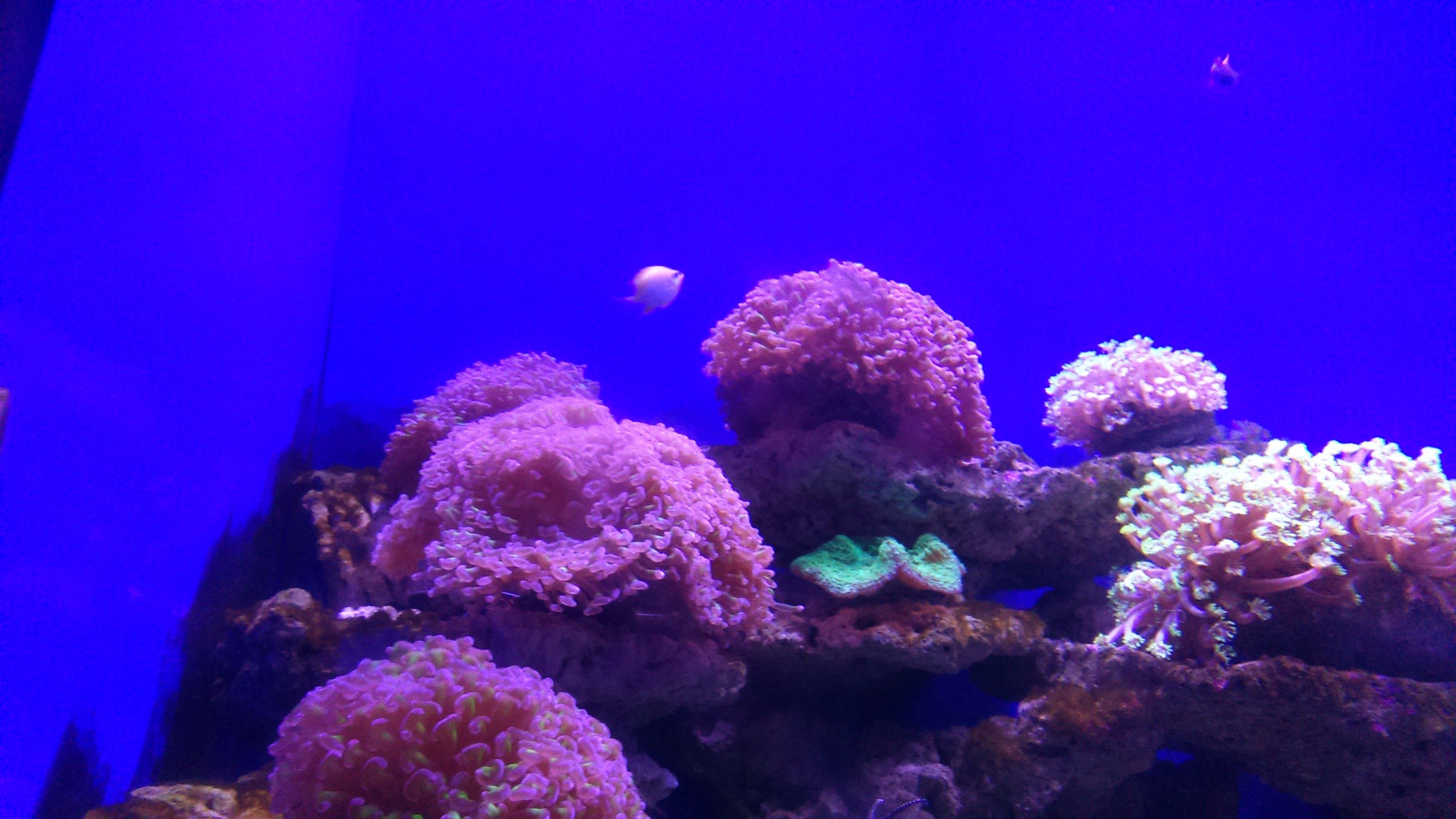 壁纸 海底 海底世界 海洋馆 水族馆 桌面 3104_1746