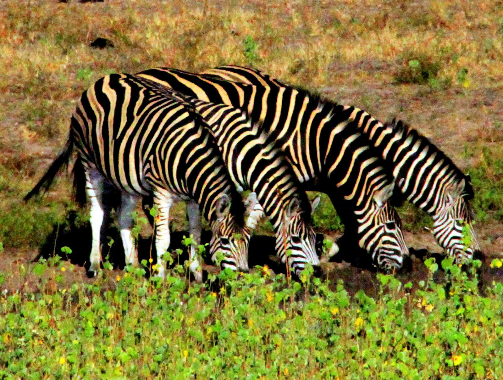 南非克鲁格公园是南非最大的野生动物保护区,里面有很多种动物,大