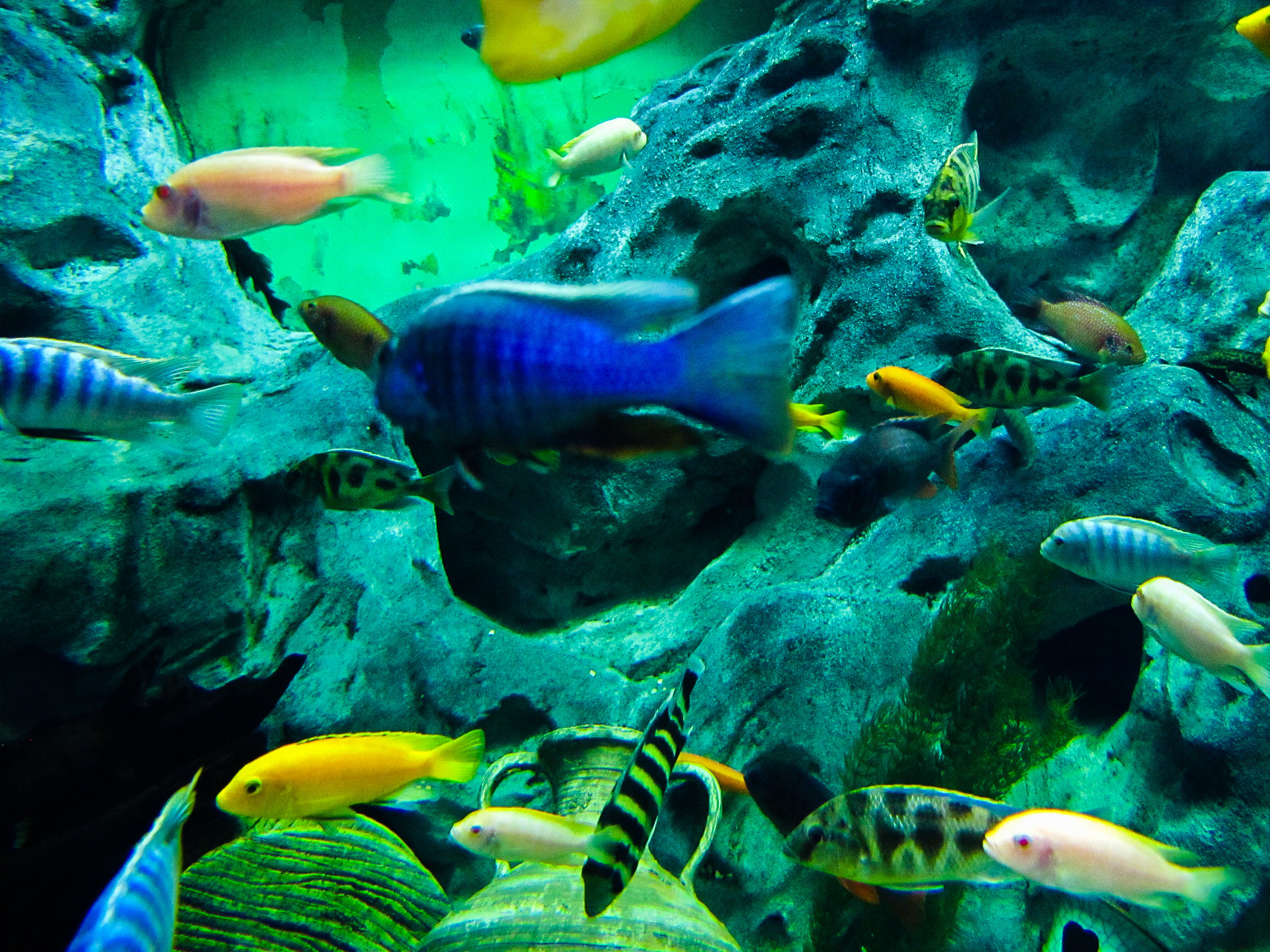 金鹰海洋世界由金鹰国际集团与韩国新世界在香港成立的金宁有限公司投资的,算起来还算是有些外国血统。他是以海底生物为主题的室内观赏性娱乐项目,是一个文化互动、亲子互动、情感互动的平台,能让更多的人认识海洋生物,了解海洋生物,进而学会保护海洋生物。去的时候最主要的观赏人群还是孩子,作为一名没有带小孩的成年来说,处在那个氛围中还算是比较尴尬的,还好我拥有一颗强大的内心。