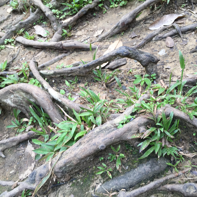 壁纸 动物 树根 蜥 蜥蜴 2448_2448