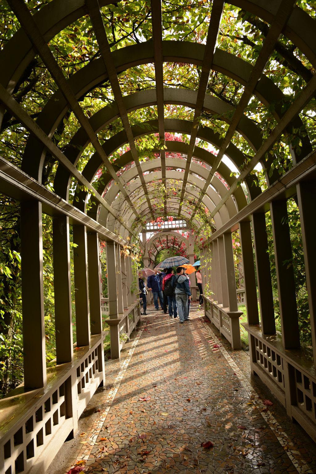 下面这个是教堂式穹顶玻璃温室花房的连廊,每年花季时节总有许多新人图片