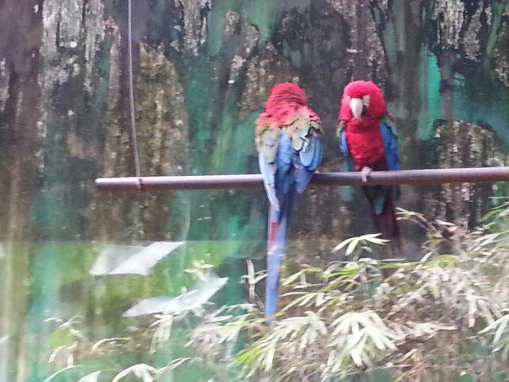 【携程攻略】浙江杭州野生动物世界适合家庭亲子旅游