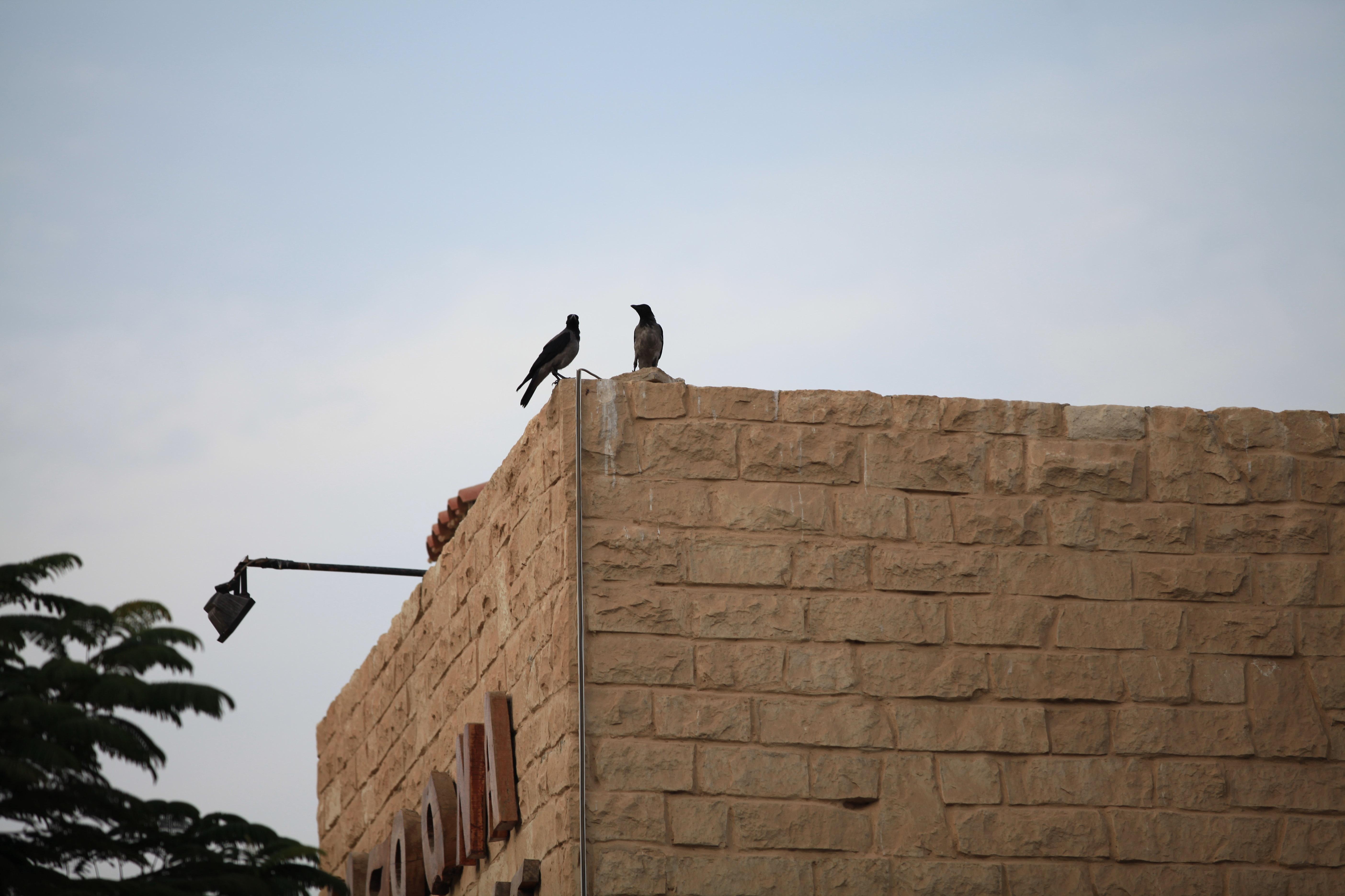 迪拜穷人住的房子图片