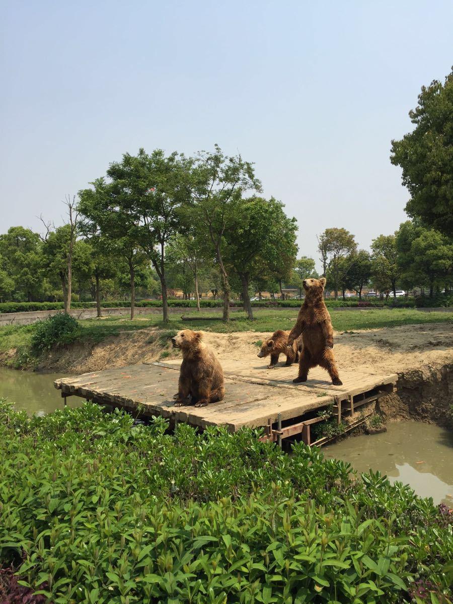 济南跑马岭野生动物世界可以自驾车游