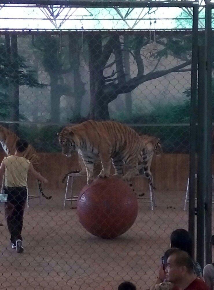 【携程攻略】湖北武汉武汉动物园好玩吗