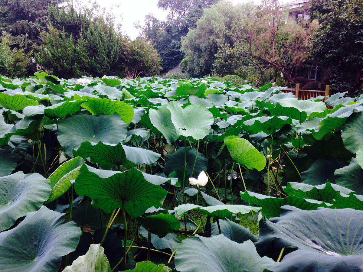 【携程攻略】上海和平公园景点