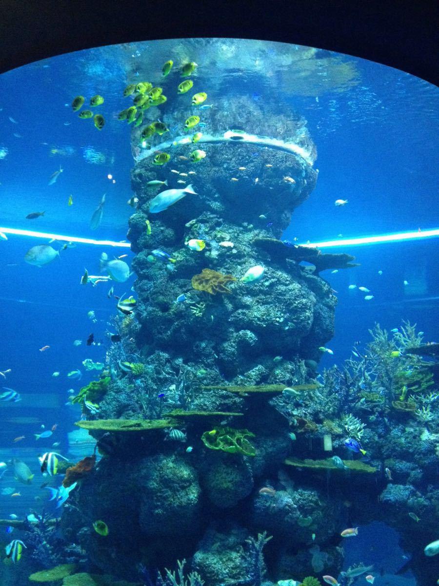 壁纸 海底 海底世界 海洋馆 水族馆 桌面 900_1200 竖版 竖屏 手机
