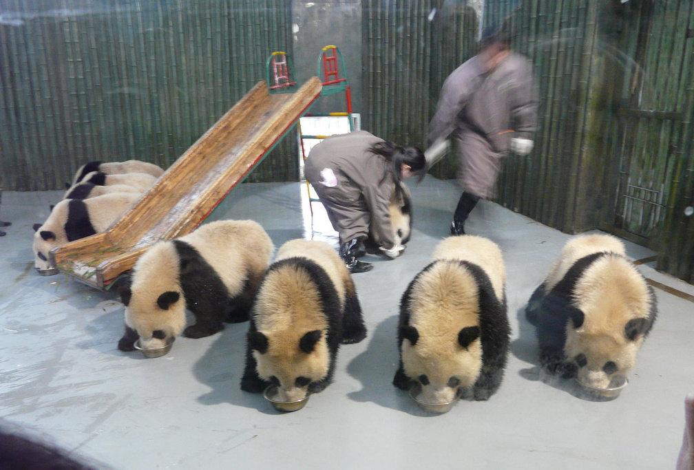 上海动物园地处上海市西郊,毗邻虹桥国际机场,原名西郊公园,园内有珍稀动物近600种、6000余只,其中有我国珍贵动物麋鹿、大熊猫、金丝猴等珍稀动物。相比上海野生动物园肯定规模要小一点,而且价格也要便宜很多,带孩子看动物也是足够了。院内环境还是可以,价格也还算可以,值得看看。