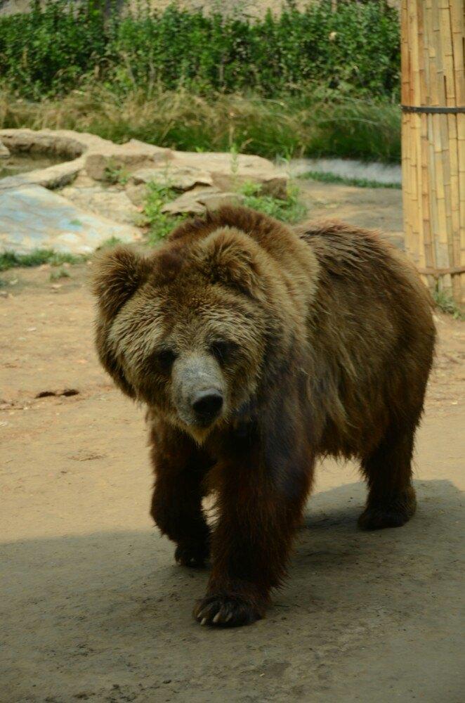 中国动物种类最多的动物园