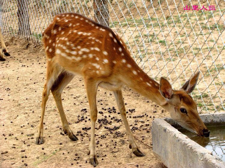 与原西宁动物园相比,青藏高原野生动物园面积大、动物品种多,展出效果大幅提高,尤其是大种群的饲养展出,效果更好;另外,园内还增加了车行参观和步行参观方式,在野生动物园内设动物散养区、动物圈养区、动物表演区、动物救护检疫区、科普教育区、餐饮游乐综合服务区等六个区共24个景点。游客可在参观的同时,亲手触摸动物,给动物投喂食物,与动物摄影留念。