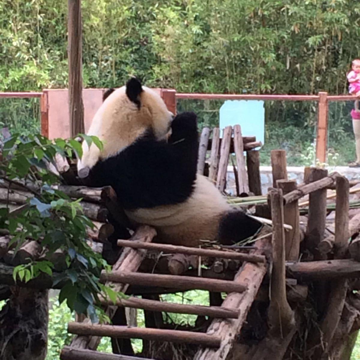 【携程攻略】云南昆明云南野生动物园好玩吗