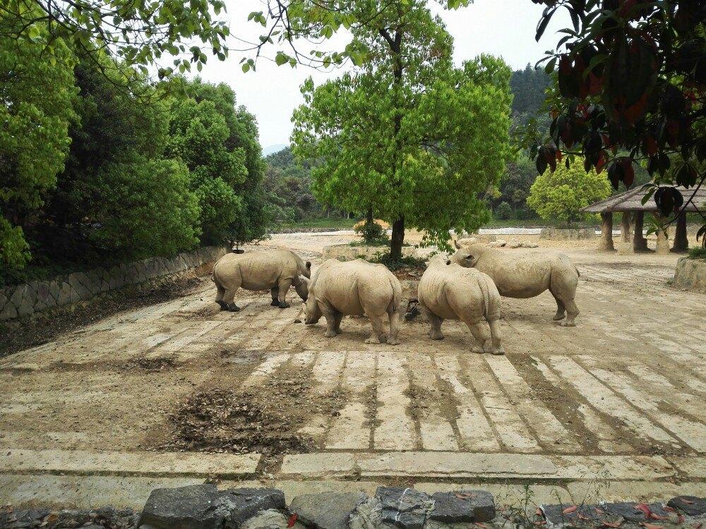 【携程攻略】浙江杭州野生动物世界景点