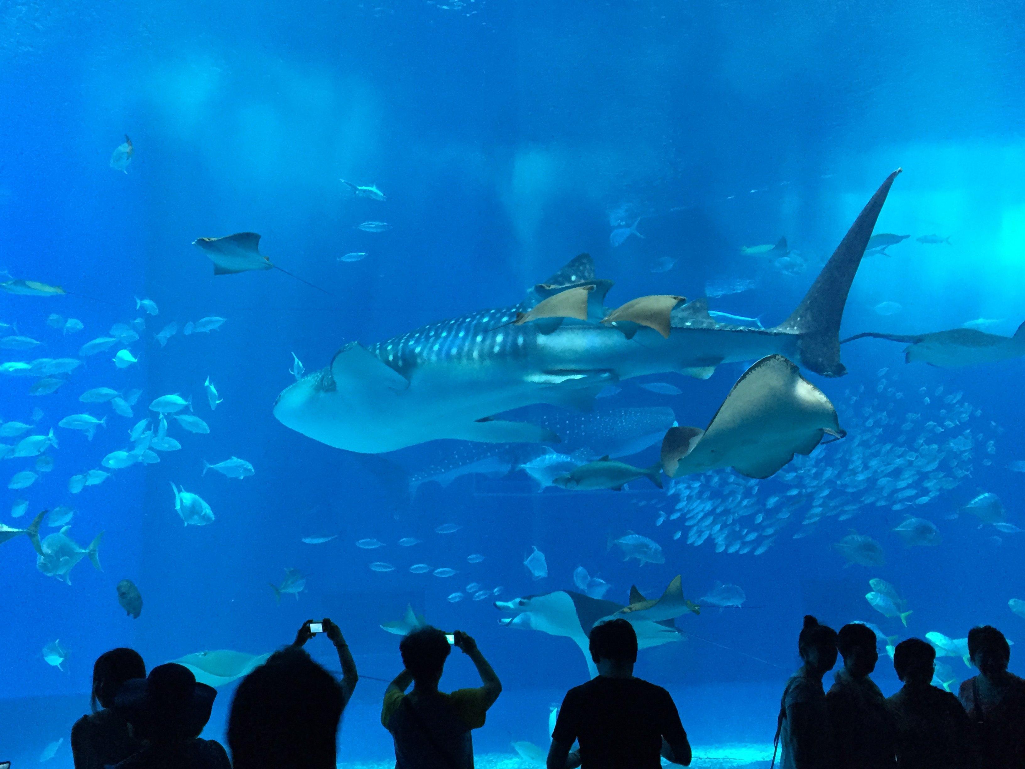 壁纸 海底 海底世界 海洋馆 水族馆 桌面 3264_2448
