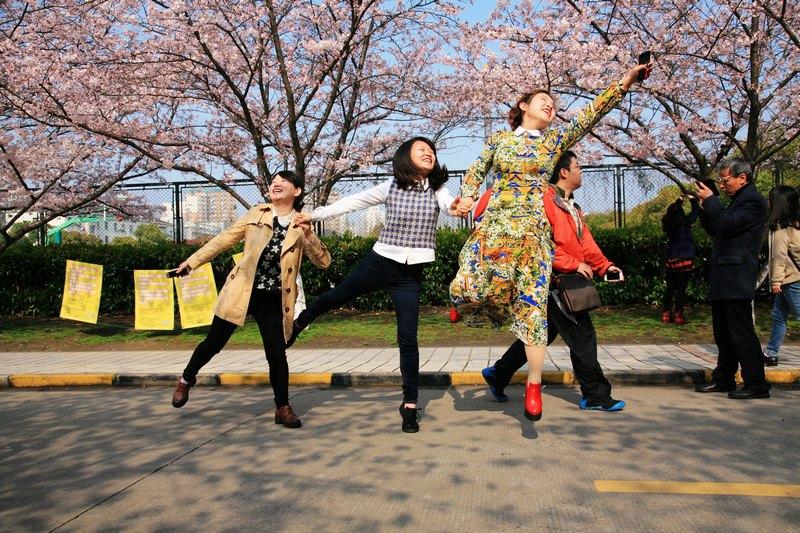 2015,同济大学赏樱花,不料还有很多马术帅哥-上海美女v马术2小游戏图片