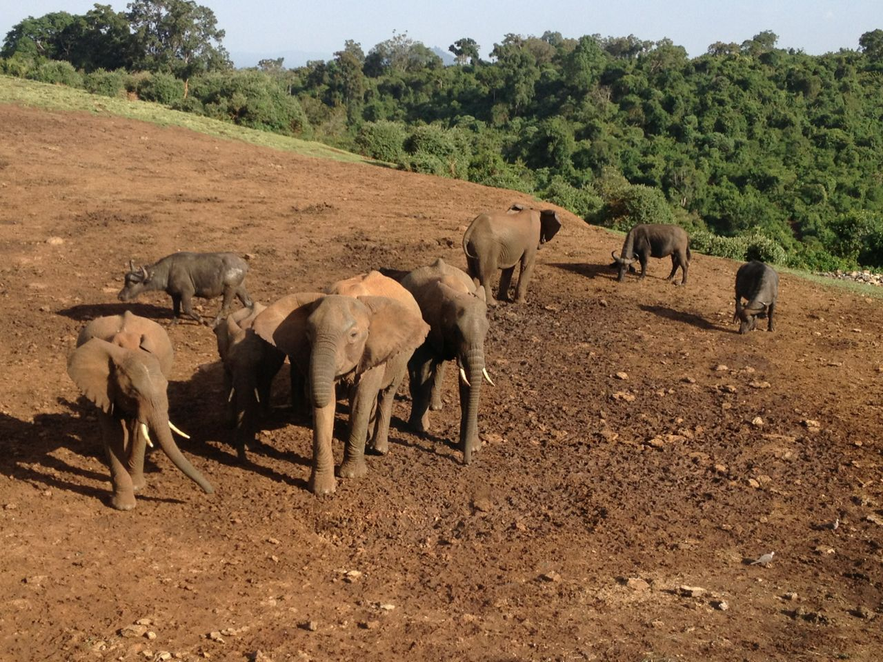 肯尼亚动物大迁移
