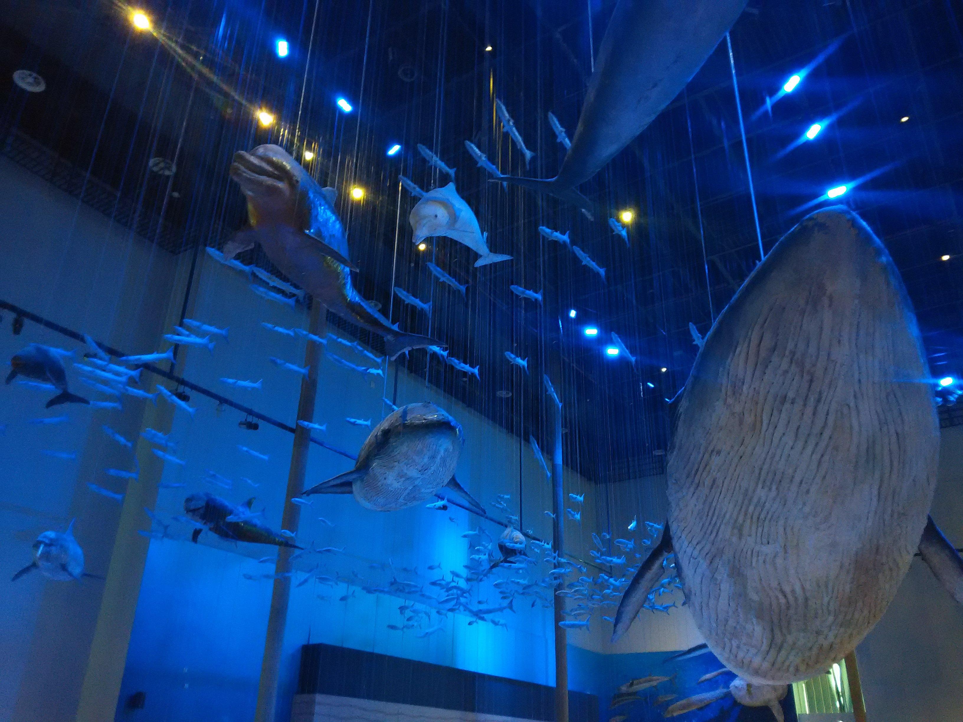 广东省博物馆--海洋动物馆