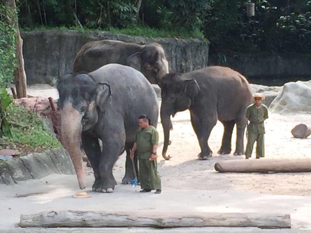 新加坡动物园 夜间野生动物园