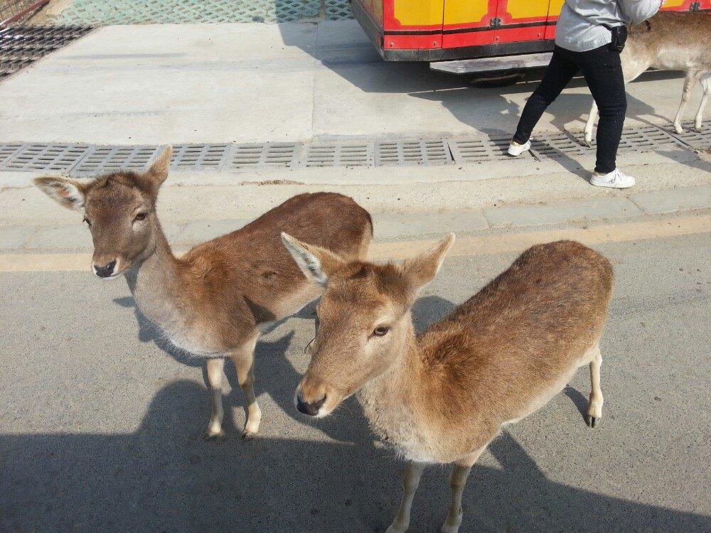 羊驼好可爱,斑马也很可爱,喂了一路,动物都钻进车里找胡萝卜吃.