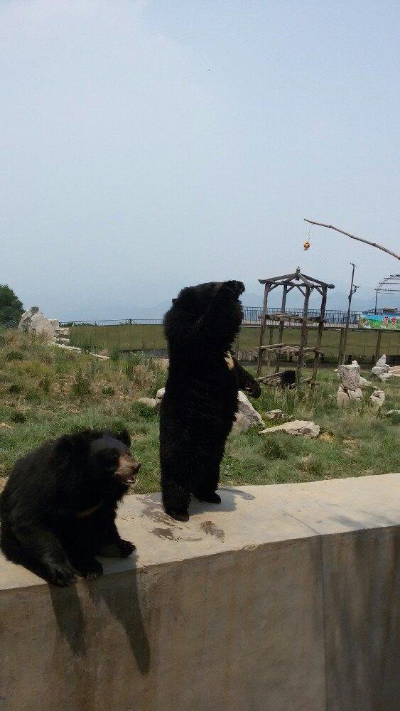 【携程攻略】山东跑马岭野生动物世界景点