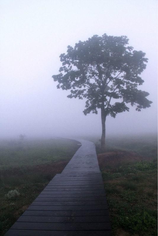 #加游站#探秘1神农架、大九湖-神农架攻略游记女生一中学陕西图片