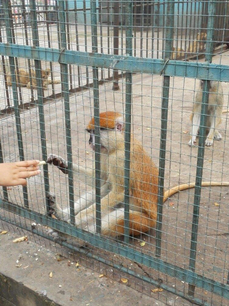【携程攻略】河北秦皇岛野生动物园家庭亲子点评