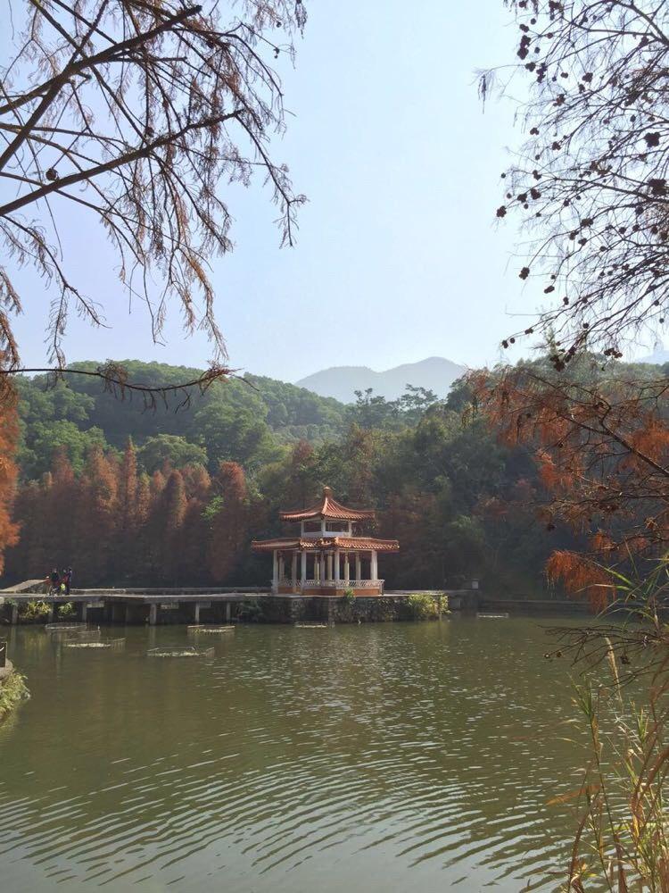 仙湖植物园-深圳