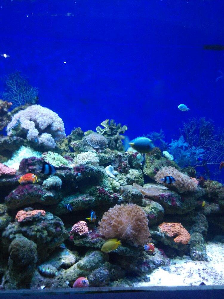 宁波海洋世界位于宁波儿童乐园园内东侧,是宁波唯一的一家展示海洋生物,宣传海洋知识的现代化专业水族馆。宁波海洋世界是目前国内极具特色的大型水族馆之一,整馆从筹建到开业只经历了短短的七个月,创造了国内海洋馆建设史上的一个奇迹,整个海洋馆从外观的设计到内部展区的布置不仅在美学价值上体现了我们独特的海洋文化,而且在技术含量上在国内同类海洋馆中也是首屈一指的。
