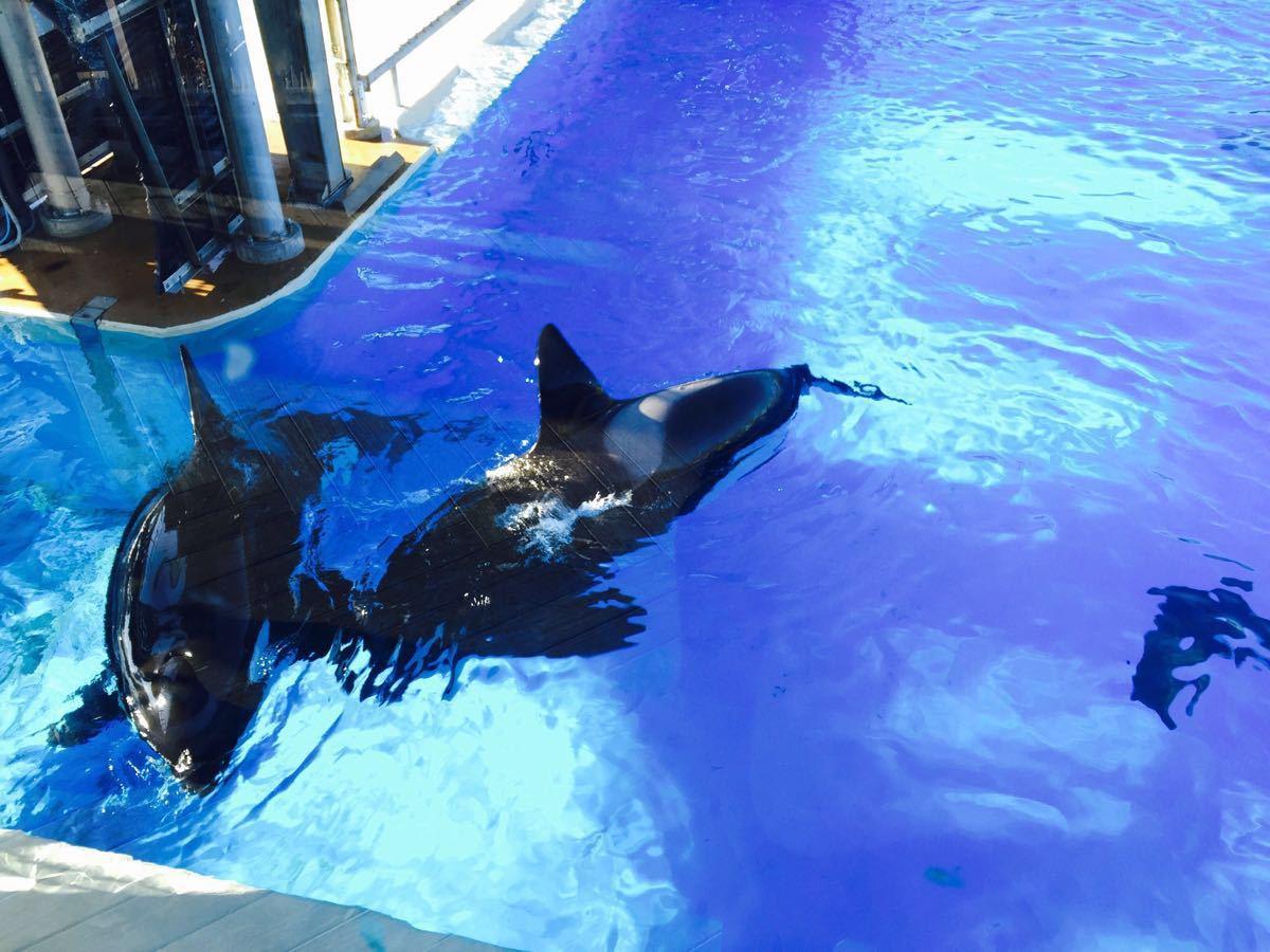 壁纸 动物 海底 海底世界 海洋馆 鲸鱼 水族馆 1200_900