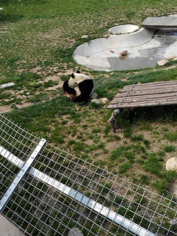 【携程攻略】江苏大丰港动物园景点,很大又好玩.有的.