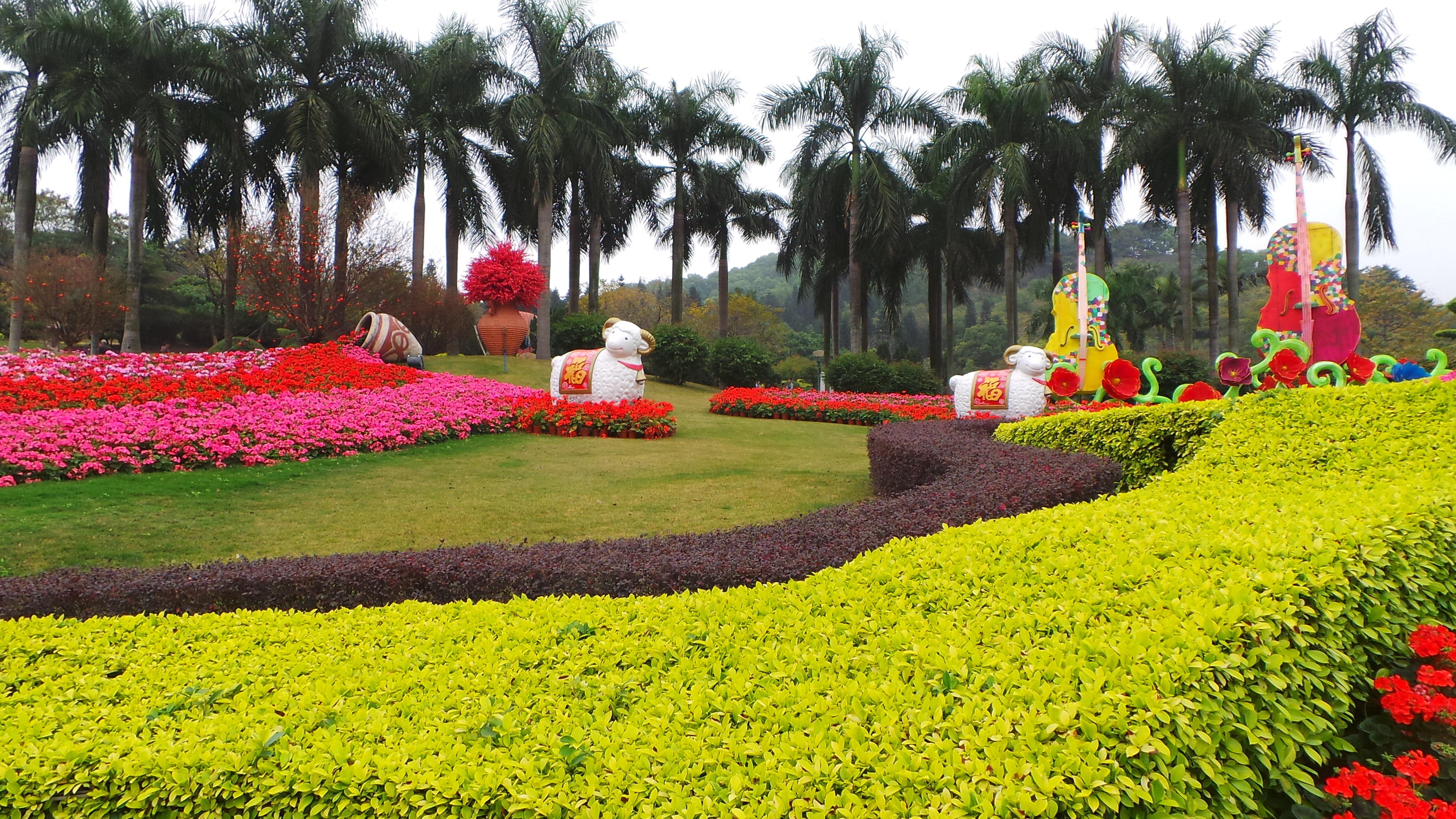 广州过年 花城看花