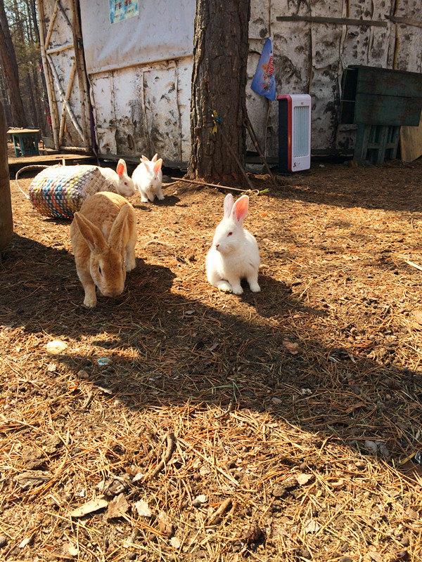 蹲着的兔子矢量图