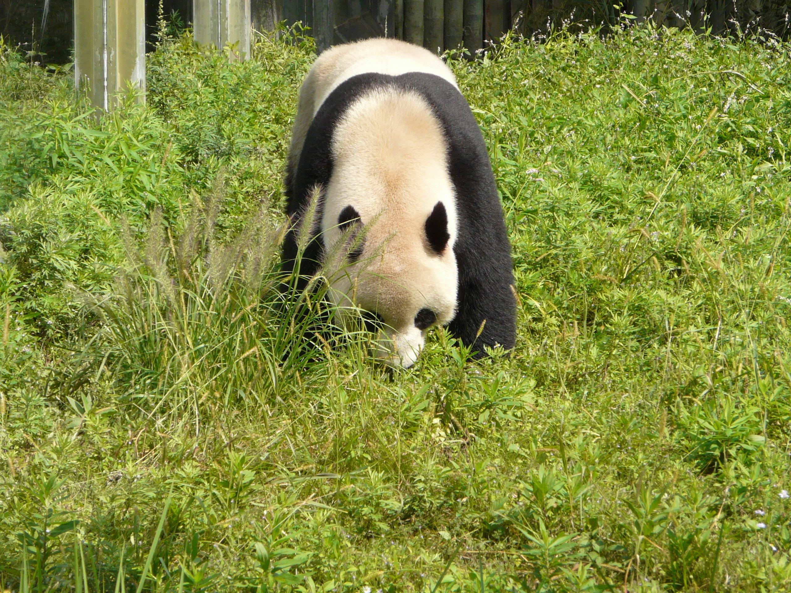 【携程攻略】北京北京野生动物园适合朋友出游旅游吗