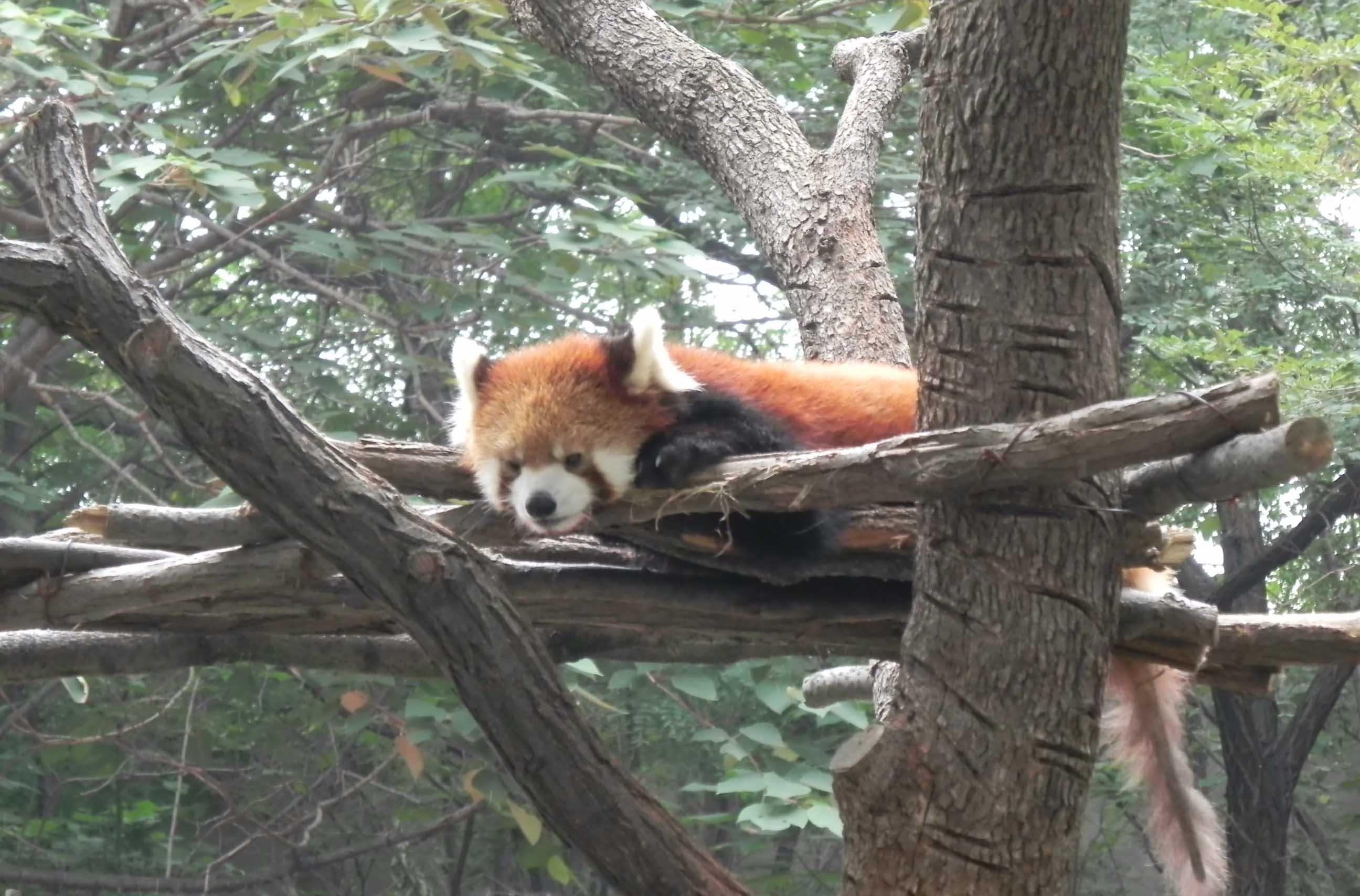 【携程攻略】山东南山公园动物园景点