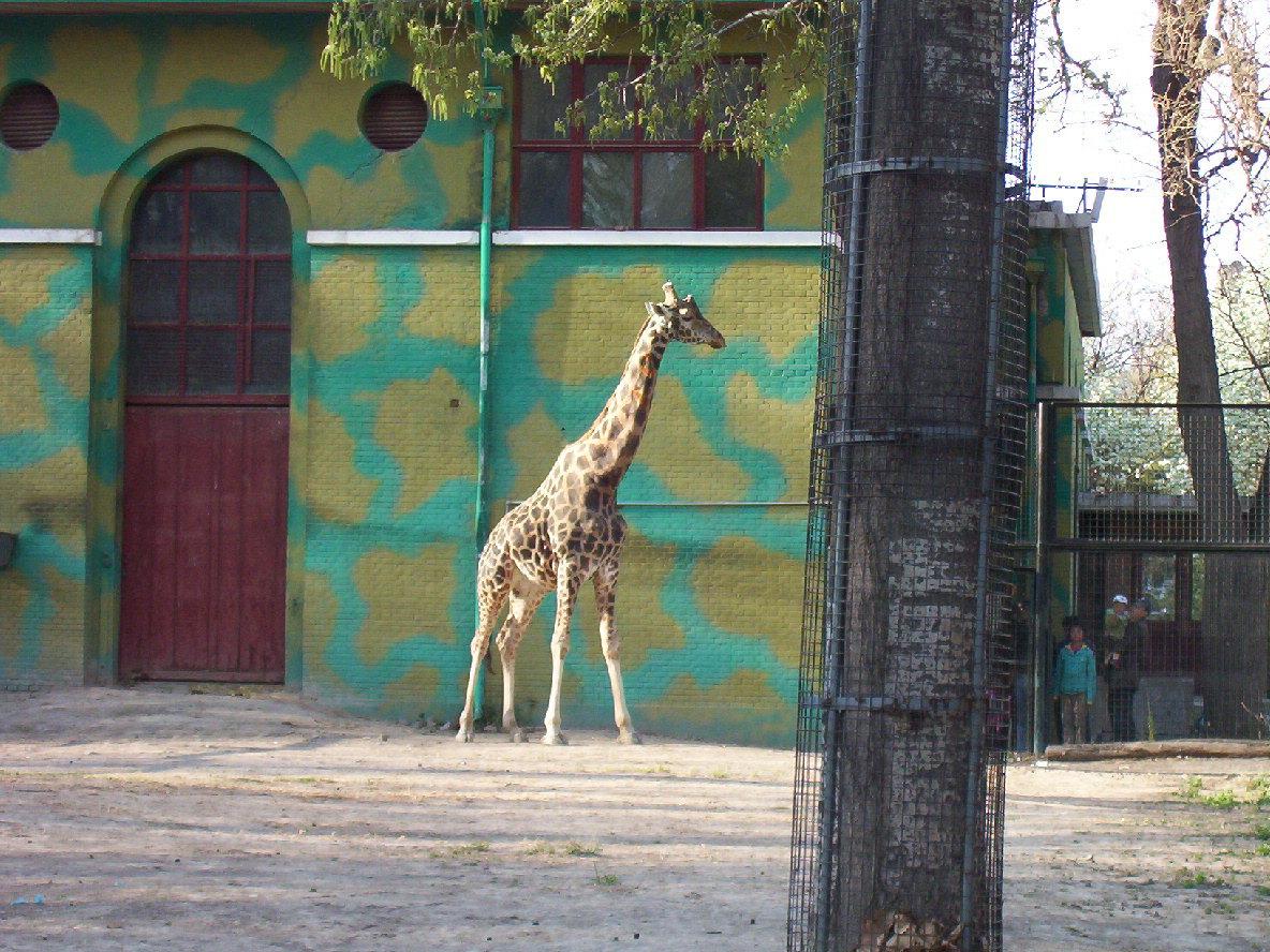 【携程攻略】北京北京动物园适合商务旅行旅游吗,北京