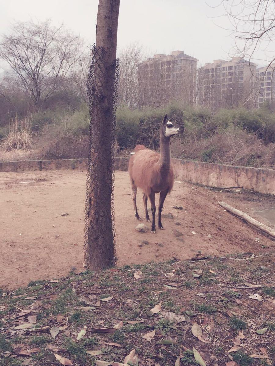 【携程攻略】浙江杭州野生动物世界家庭亲子点评