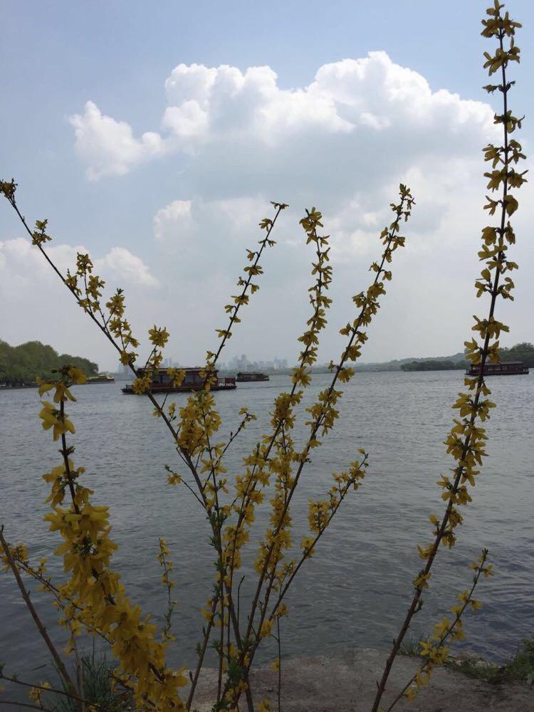 西湖p21a36电路图