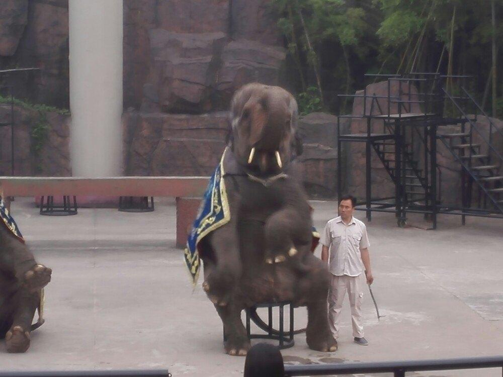 【携程攻略】浙江杭州野生动物世界适合商务旅行旅游