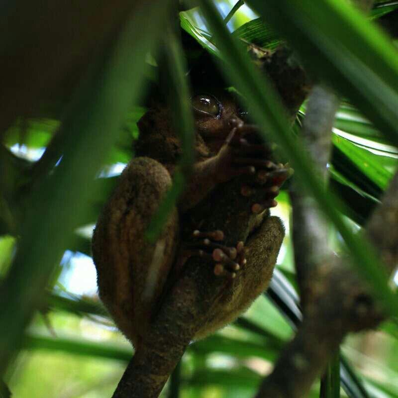 【携程攻略】米沙鄢薄荷薄荷岛眼镜猴游客中心好玩吗
