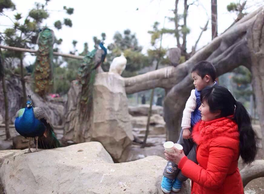 【携程攻略】江苏常州淹城野生动物世界好玩吗