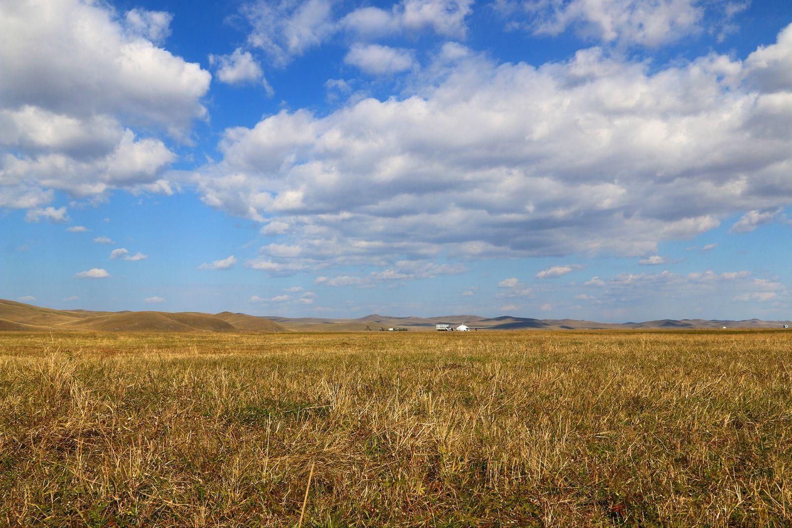 壁纸 草原 成片种植 风景 植物 种植基地 桌面 1600_1067