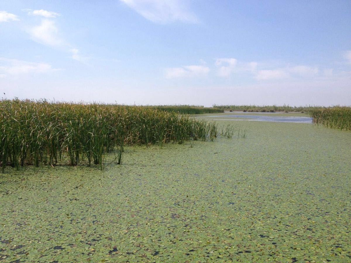杭州湾公园湿地路线靖西自驾游攻略国家图片