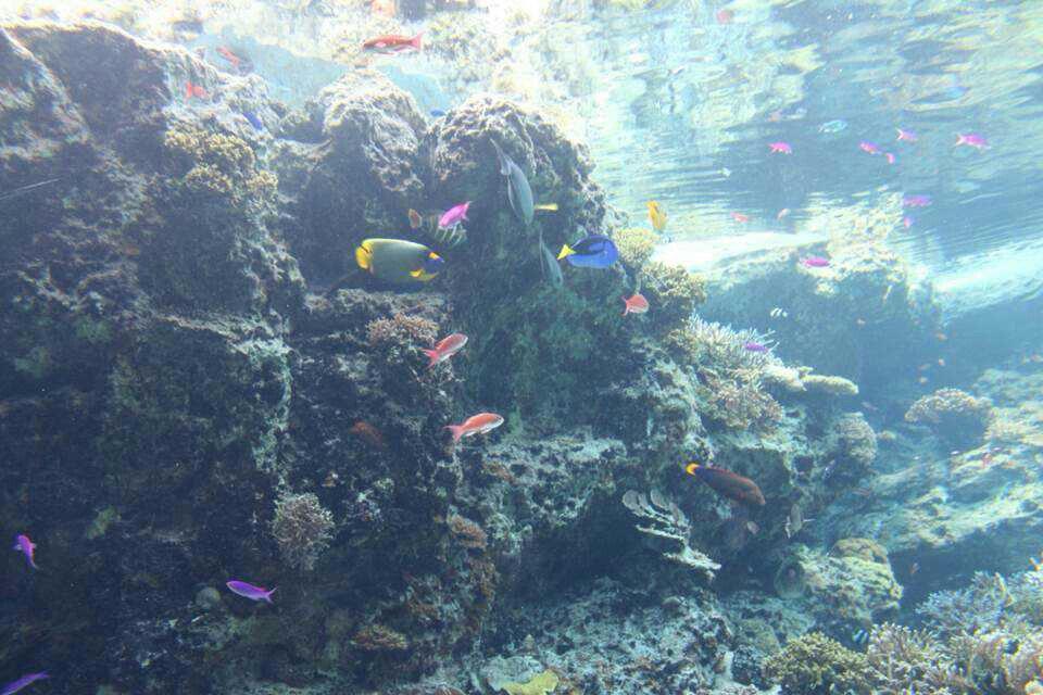 在冲绳如果要选出最受小朋友喜爱的景点,那么海洋博公园一定排名第一。整个公园建在碧蓝的翡翠海边,由美丽海水族馆、海豚剧场、翡翠海滩、热带梦幻中心、海洋文化馆、冲绳乡土村、儿童乐园等组成,面积非常大,足够小朋友玩一整天。特别是美丽海水族馆的号称世界第一大、贯穿两层楼的巨大水槽黑潮之海,八米多长的鲸鲨在你头顶上游来游去,非常震撼,同样精彩还有户外的海豚表演,深受大人和小朋友喜爱。海洋博公园是我们去过最棒的海洋公园,如果下次再来,一定会在这里嗨皮一整天。想了解详细,可以看看我的游记:http:&#x