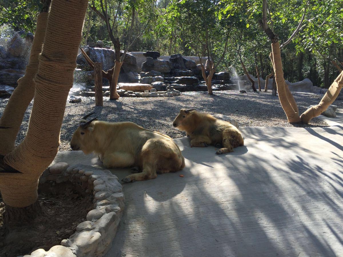 【携程攻略】北京北京野生动物园好玩吗