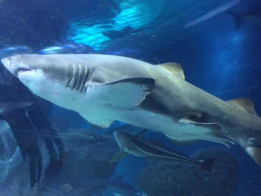 壁纸 动物 海底 海底世界 海洋馆 鲸鱼 水族馆 1067_800
