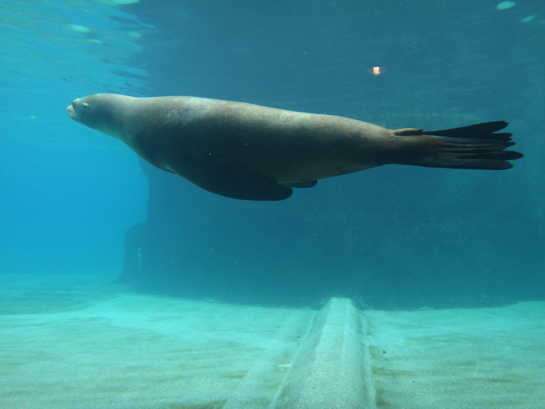 海狮笨笨的样子挺可爱的