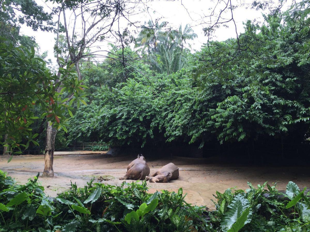 新加坡動物園和北京動物園有著本質的區別,看不到在籠子了失去自由的動物們,取而代之的是動物們的悠閒自在,愜意的很呀。同時沒有絲毫的異味,鳥語花香熱帶雨林的感覺,我很詫異也很佩服。管理水平到位,設計的非常合理。動物們和游客之間的距離看似非常近,但是卻橫跨著不可逾越的障礙。有時候在想,如果北京動物園也可以如此設計,那該有多好。如果說你覺得新加坡動物園只是光看動物,那麼就錯了。這里還有一個小型的水上樂園,孩子們可以在這里玩水。地面的材質屬于比較軟質的材料,孩子們即使摔倒也不會很疼。這一點應該是充分考慮到了小孩子的