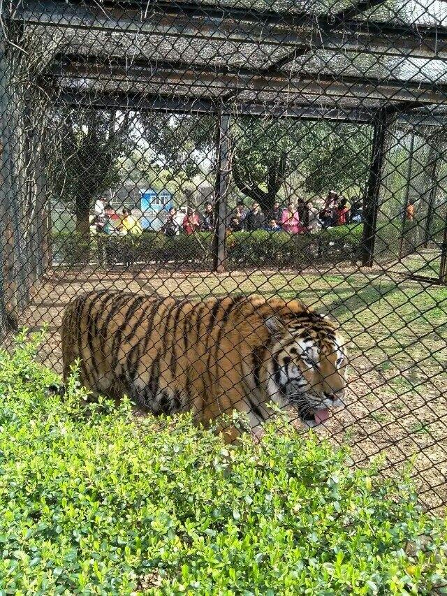 很多的动物,还有我最喜欢的蛇馆,里面的动物基本可以近距离去看到