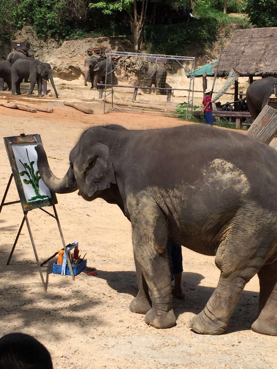 【携程攻略】清迈府泰国大象自然保护公园景点,非常多